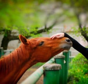 equine therapy for drug rehab and mental health treatment