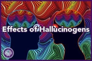 effects of hallucinogens on the brain